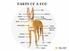 Animal Body Parts Vocabulary in English (with Pictures) - 7 E S L English Idioms, English Writing, English Study, English Words, English Lessons, English Grammar, Teaching English, English Language, English Tips