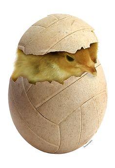 Volley chick! Happy Easter to all Volley Fans! Buona pasqua a tutti i giocatori di pallavolo! Feliz Pascua a todos los jugadores de voleibol! #Volley funny stuff
