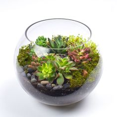 DIY Terrarium Kits for Succulents and Air Plants