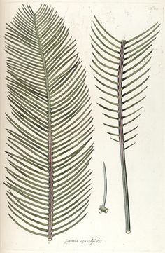 6 Gorgeous Downloadable Botanical Prints