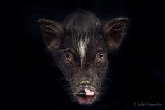 Fotografía Full on por Julia Wimmerlin en 500px
