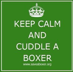 Never pass up a chance to cuddle with a Boxer.