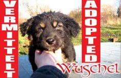 Wuschel hat soeben ein neues Zuhause gefunden - Danke, Ihr Lieben und alles Gute, kleiner Freund!
