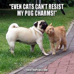 Caption Us Wednesday Winner for September 18, 2013 - Join the Pugs