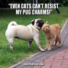 Pug and the Kitty