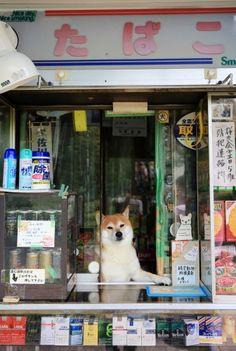 001 the real japan, real japan, animal, animals, japan, japanese animal, deer, duck, bird, cat, neko, cute, dog, inu, crab, fish, zoo, park, wildlife, tour, explore, travel, adventure, pet, puppy, kitten, rabbit, butterfly http://www.therealjapan.com/subscribe