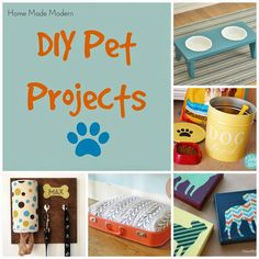 DIY projects for your pet!