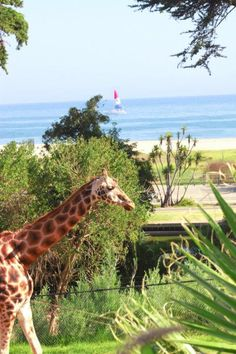 What to Do: Santa Barbara Zoo : One Weekend in Beautiful Santa Barbara : TravelChannel.com