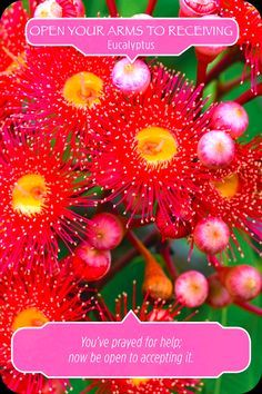 Eucalyptus, from the Flower Therapy Oracle Card deck, by Doreen Virtue Ph.D and Robert Reeves