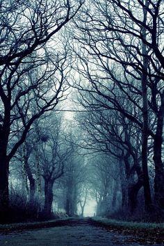 Mystical Trees by NievesMarie96.deviantart.com on @deviantART #nature