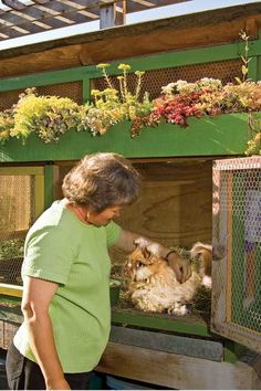 In this green-roofed rabbit hutch, the alfalfa hay bedding and droppings of two fluffy Angora rabbits are collected for fertilizer, and their owner gathers and spins their fur into yarn. The hutch's sedum-covered roof absorbs rainwater.   Photo: Mike Jensen   thisoldhouse.com