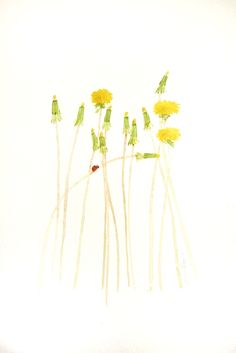 Watercolor: Dandelions Study