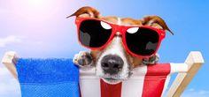 seasonal dog photo - Google Search