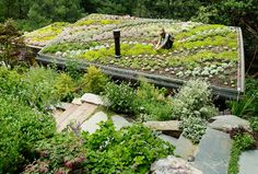 Edible green roof would be more my style. The edges including some things like strawberries would be nice as well, they don't have a very extensive root system and don't grow too far from where they come out of the ground.