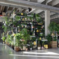The artist's biggest installation yet transforms Garage Museum of Contemporary Art into a forest