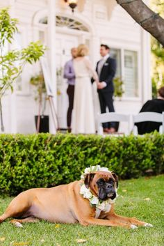 An Intimate Green & White Los Angeles Wedding California Wedding Venues, Los Angeles California, Rehearsal Dinners, Dog Friends, Wedding Day, House, Home, Wedding Anniversary, Haus