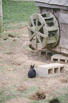 Image result for bunnyville Image