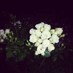 Night roses