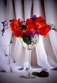Colour change flowers