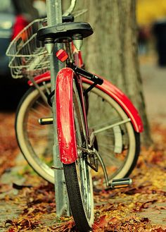 Love taking my bike for a Fall Ride. New Bicycle, Old Bikes, Bike Style, Biker Chick, Cool Bicycles, Vintage Bicycles, Cycling Bikes, Tricycle, Pedal Pushers
