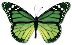 #green #butterfly