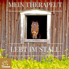 Pferdesprüche & Vielseitigkeit-emma-pferdefuttershop.de(3)