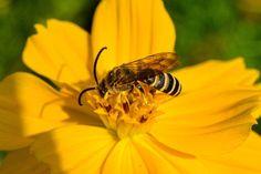 Flowers, Pictures, Animals, Life, Photos, Animales, Animaux, Animais, Flower
