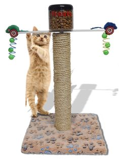 Exercise Smart Toy Cat Automatic Pet Food Distributor To Control Weight Complete Activity Furniture >>> More info could be found at the image url.-It is an affiliate link to Amazon. #CatToys