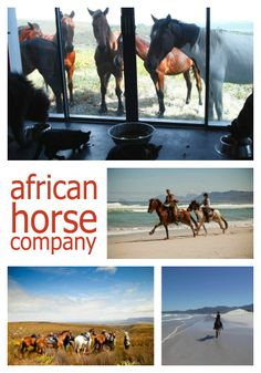 African Hourse Company. Address: farm 215 private nature reserve Tel: + 27 82 667 9232 Email: contact@africanhorseco.com Stuff To Do, Things To Do, Company Address, Great White Shark, Whale Watching, Nature Reserve, Day Trips, Mountain Biking, Diving