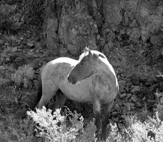 safe act for horses and burros | thing open hearts for the wild horses share the land native wild horse ...