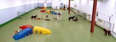 if i could afford it, would you come? Indoor Dog Park, Pittsburgh, Your Dog, Exercise, Puppies, Adventure, Business, Dogs, Animals