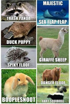Animal names for Brace yourselves! 23 Hilarious Animal Memes So Cute They'll Make You LOL Other names for animals Need a Laugh? These Animal Memes Should Do the Trick! Funny Doggo Memes That Will Get Your Tail Wagging Top 40 Funny animal pi. Funny Animal Names, Cute Animal Memes, Funny Animal Quotes, Animal Jokes, Funny Animal Pictures, Cute Funny Animals, Funny Photos, Animal Funnies, Funny Animal Humour