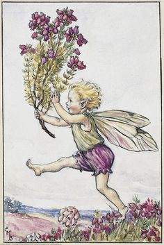 Heather Fairy from Flower Fairies of the Summer. Cicely Mary Barker