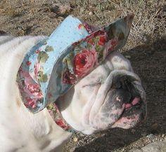 #English #Bulldog rain hat