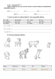 6654510 fise-limba-romana-clasa-i Kids Education, Sheet Music, Map, Child, Early Education, Children, Kid, Maps, Infant
