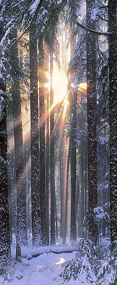 Winter Solstice in the Olympic National Park of northwestern Washington