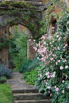 Japanese Anemones at Broughton Castle Gardens, Oxfordshire