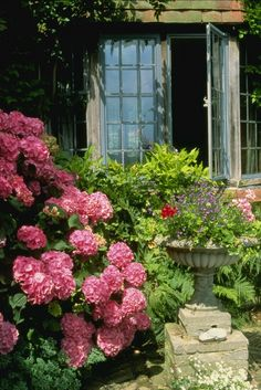 Hydrangea and leaded windows English Country Gardens, English Countryside, Hortensia Hydrangea, Hydrangeas, Pink Hydrangea, Pink Flowers, My Secret Garden, Dream Garden, Garden Inspiration