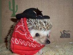 cute hedgehog dressed like a cowboy