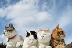 でこぼこ - かご猫 Blog