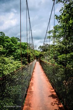 Bridge, Boquete Panama #travel