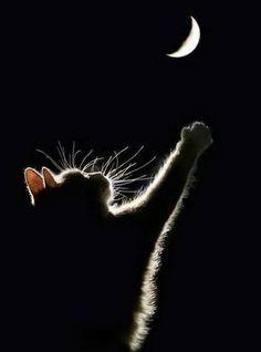 Een kat reikt naar de maan,mooi gezicht-----------------lbxxx.