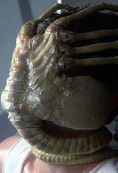 Alien - facehugger