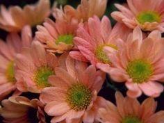 Hoa, hoa, Đối với bạn mật ong, hoa, hoa, Hoa Hồng đỏ, Hoa hồng, hoa & Roses, hoa, hoa & Roses - fenysugar76 Blog - Câu chuyện bài học, 1 IGES bưu thiếp, hình ảnh 3D, 04 tháng 7, Âm thanh của Violin, Advent thơ, người Mỹ gốc Phi, động vật bạch tạng, động vật trên thế giới, Anh, ca khúc kersztény tiếng Anh, ANGELS, kỷ niệm, kỷ niệm, ngày của mẹ, hình ảnh nghệ thuật, em bé ra đời, Búp bê, Best Friends, lời khai, bướm, bướm, người nổi tiếng đám cưới, cuties, Xin chúc mừng, Thứ năm, THIẾT KẾ…