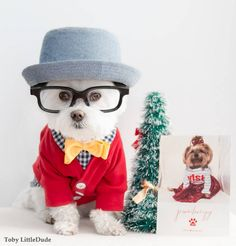 Discover the most stylish Pet Holiday greeting cards from Minted. Image courtesy of Toby_LittleDude
