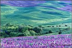 images of springtime - Google Search