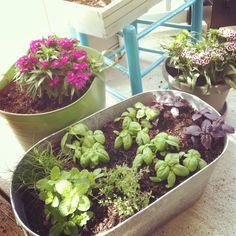 Easy herb container garden.