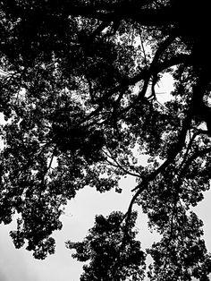 .... andando árvores e folhas ...
