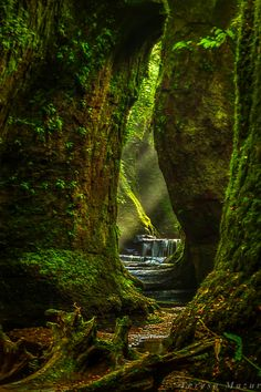 ~~Devil's Pulpit, Scotland | forest waterfall, UK | by Teresa Mazur~~