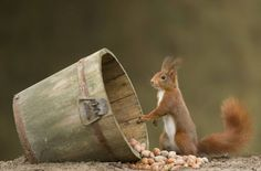 Gordon is checking on the winter's supply of nuts, not enough.